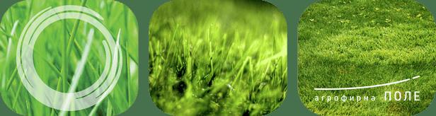 Семена трав