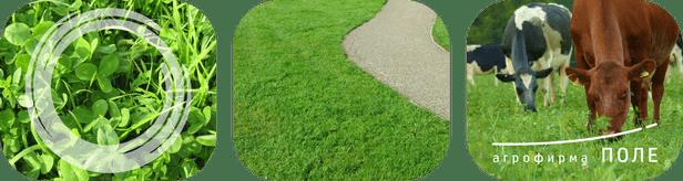 Семена трав и травосмеси